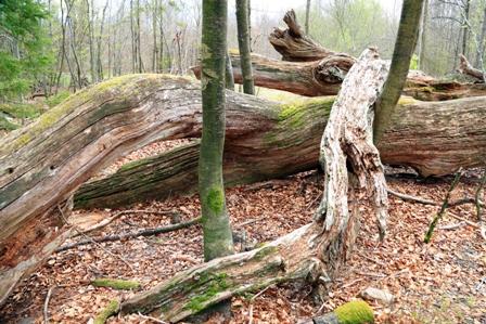 Toter Baum im Naturpark Schönbuch