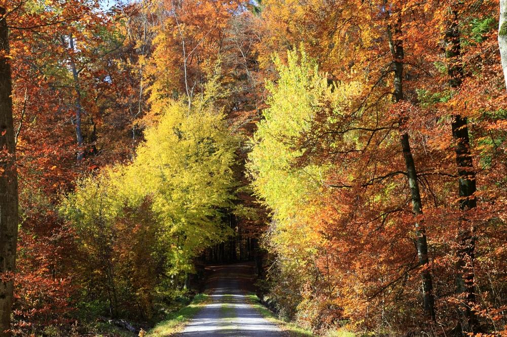 Bei Herbstwanderungen im Wald kann man das bunte Farbenspiel der Blätter genießen.