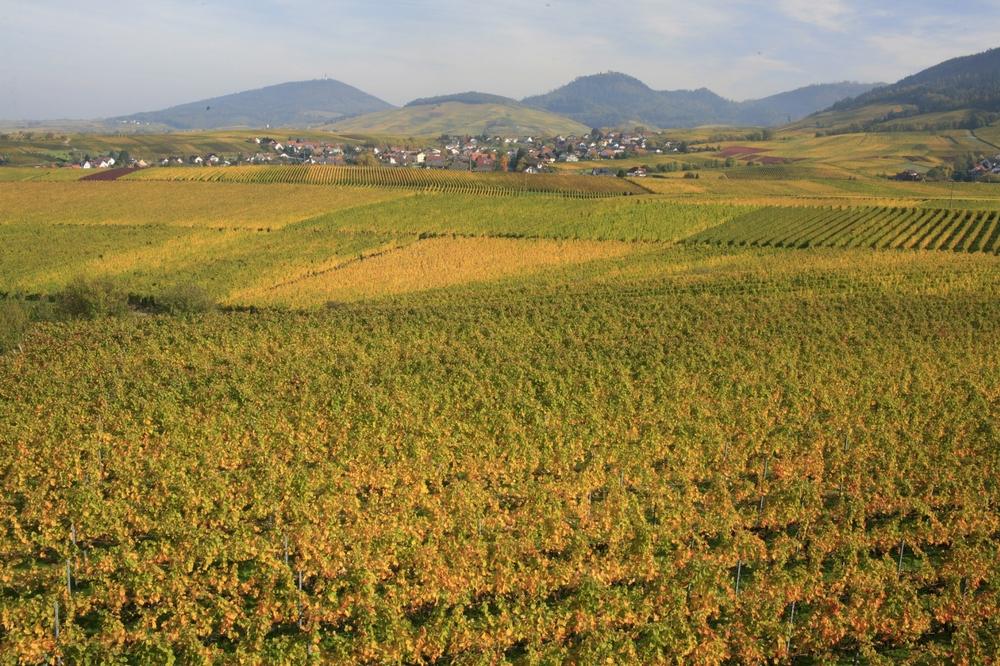 Weinberge bieten sich gerade wegen ihrer Farbenpracht für Herbstwanderungen an
