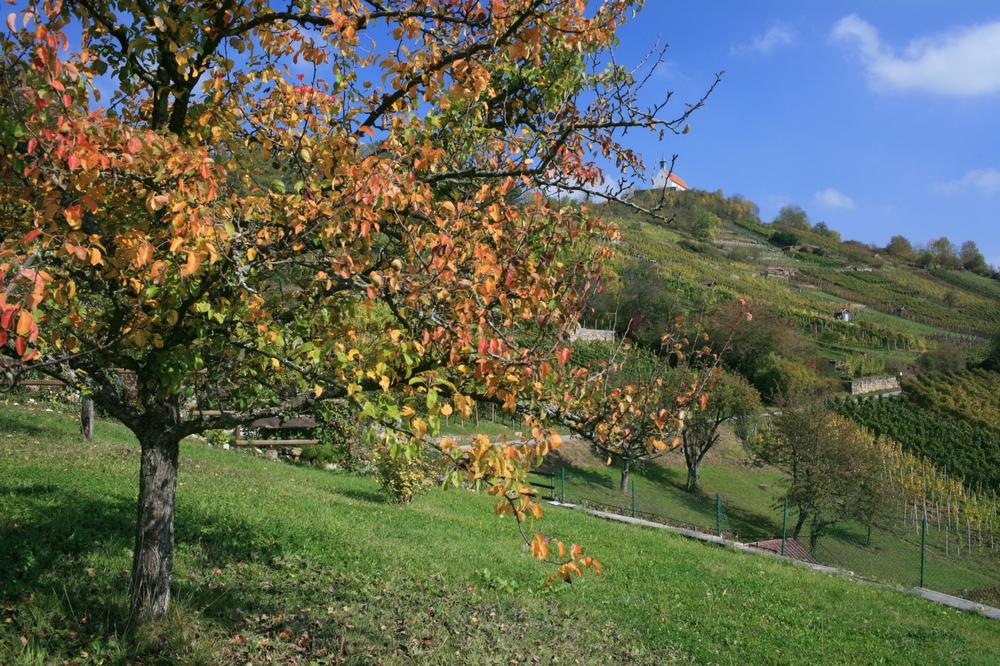 Herbstliche Streuobstwiese auf dem Wurmlinger Kapellenwegle