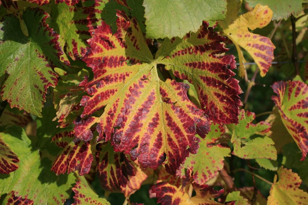 wine in autumn