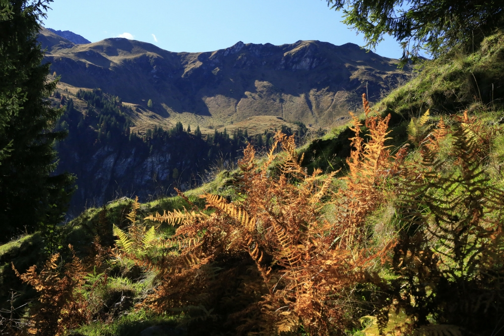Landschaft bei Saalbach-Hinterglemm.