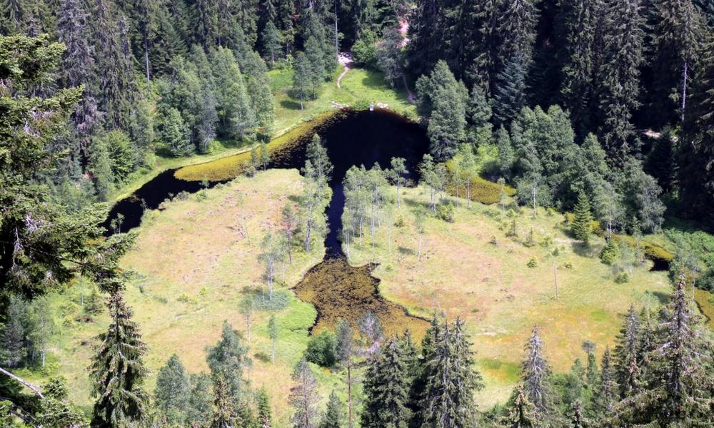 Moor im Nordschwarzwald