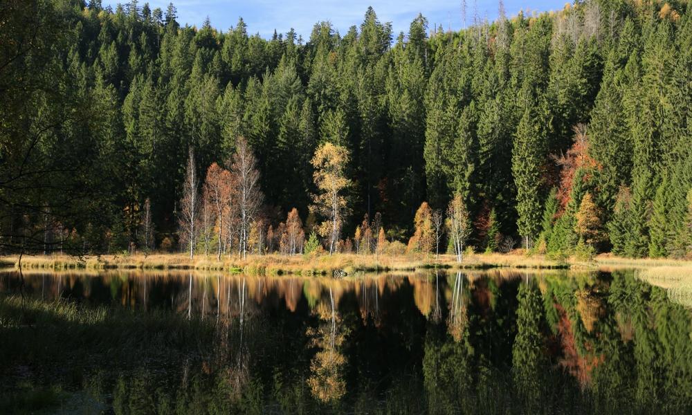 Moorsee im Schwarzwald