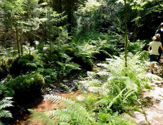 Wandertipps Schwarzwald