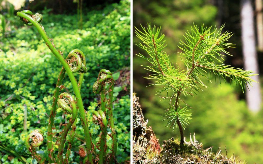 Im Frühling erwacht die Natur im Rotmurgtal im Nationalpark Schwarzwald