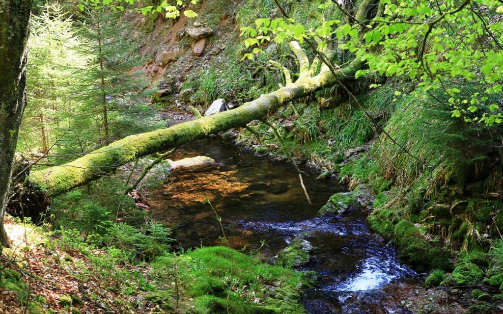 DAs Muckenlochbächle ist ein kurzer aber wilder Zulauf zur Rotmurg im Rotmurgtal im Nationalpark Schwarzwald.