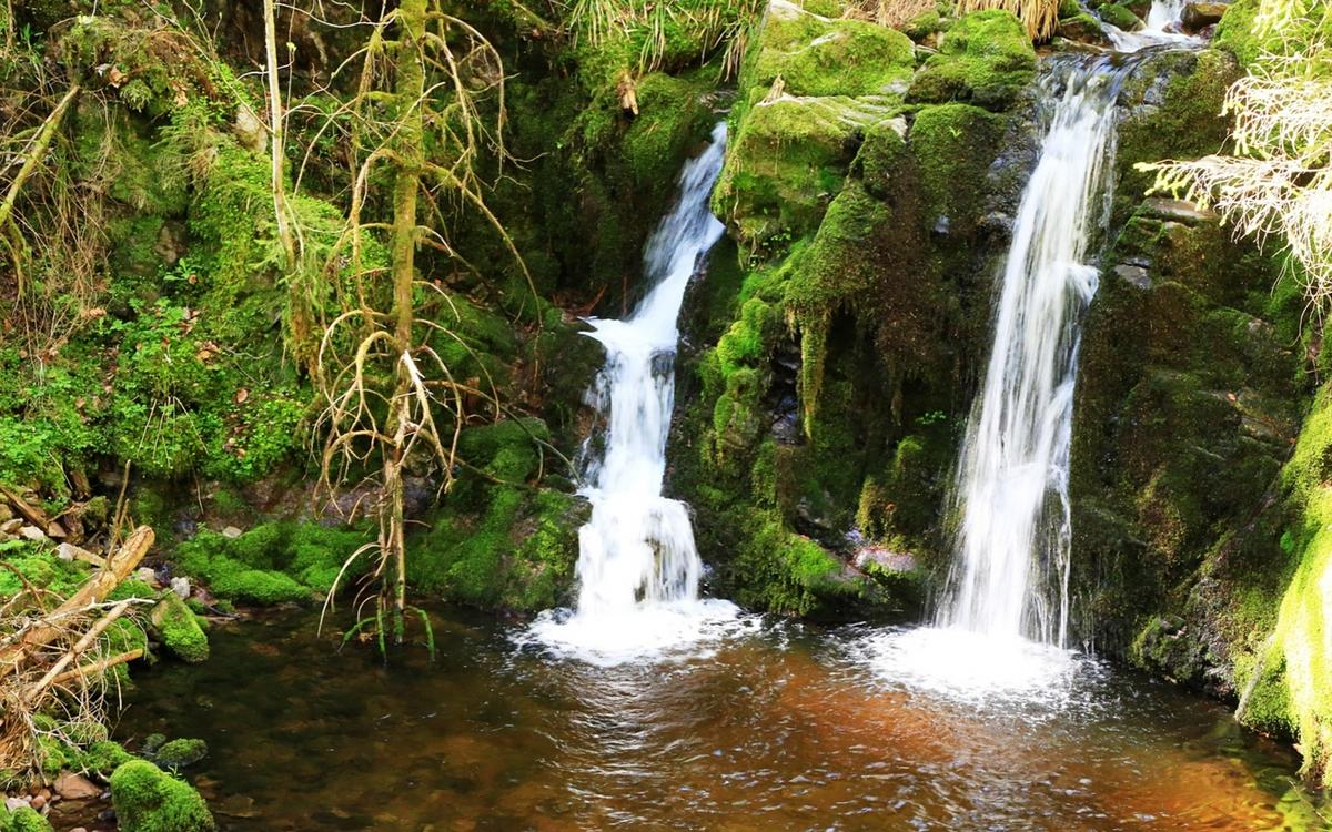 Im Rotmurgtal im Nationalpark Schwarzwald plätschert es hinter fast jeder Wegesbiegung.