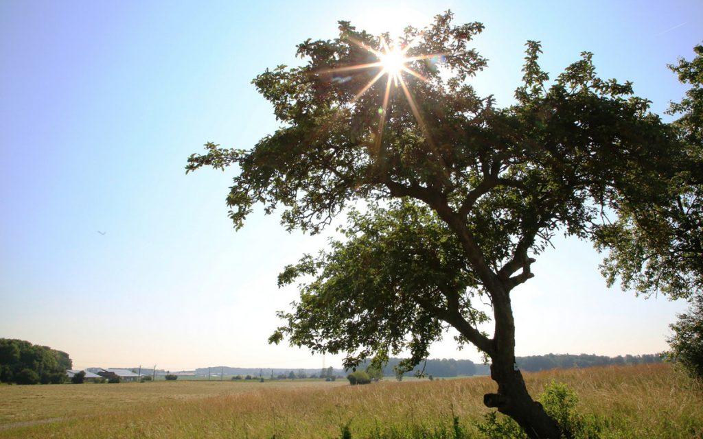 Die Sonnenstrahlen brechen am frühen Morgen durch die Baumkrone.