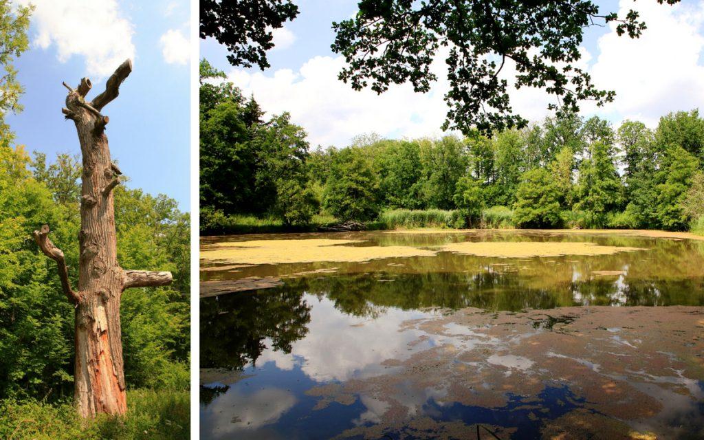Mit der Murrbahn zur Markgrafeneiche und schönen Seen
